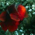 Аватар цветочка