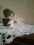 Аватар sveta41064