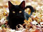 Аватар Черный Кот
