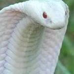 Аватар kobra18